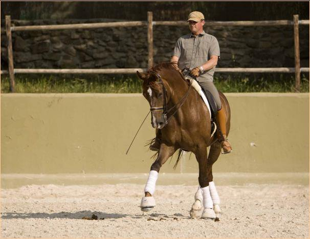 Professional Grand Prix Level Animal Krackers Equine